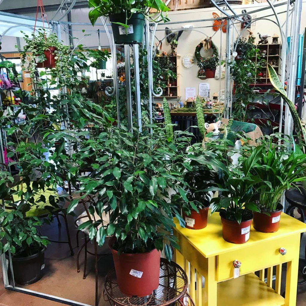 Rainforest Nursery