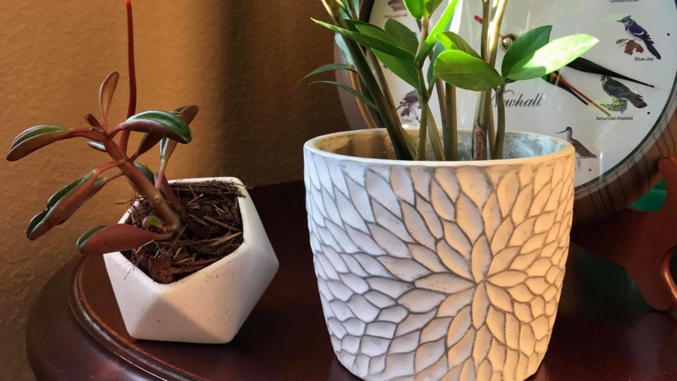 Peperomia and ZZ Plant